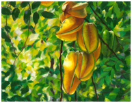 Starfruit Painting in Oil